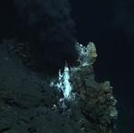 Deep-sea Vent