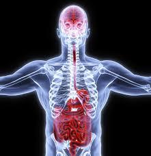 Gut-brain axis image