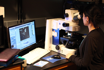 Researcher working with microscope